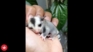 Cute Baby Animals Video Compilation For Animal Lovers - To Brighten Your Day #2