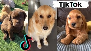 TIK TOKS THAT MAKE YOU GO AAWWW  ~ Funny Dogs of TikTok Compilation ~ Cutest Puppies